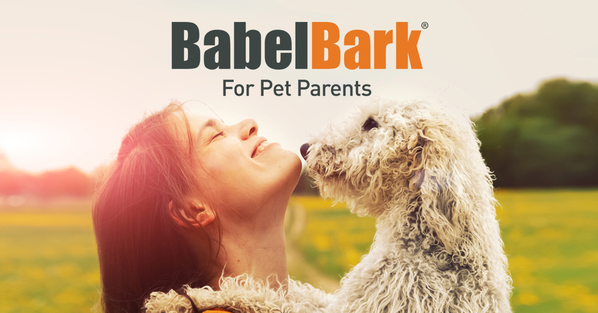 BabelBark FB Ad 1 1200x628 1